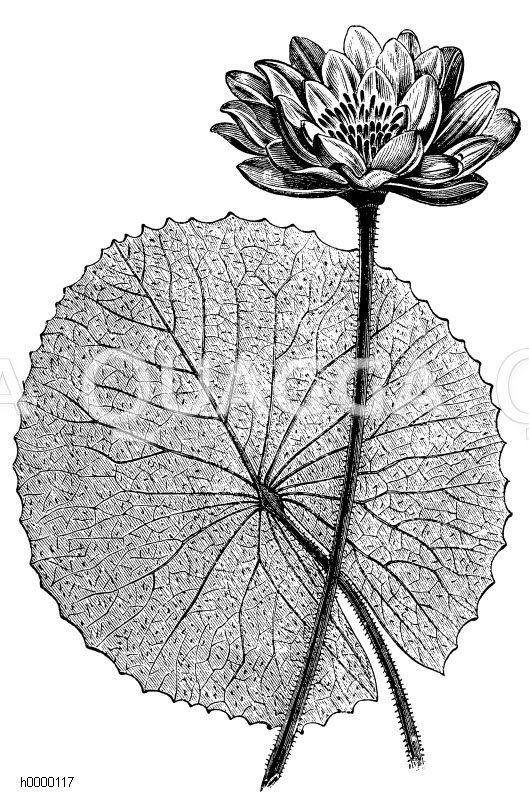 Botanische Systematik