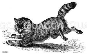 Katzenartige