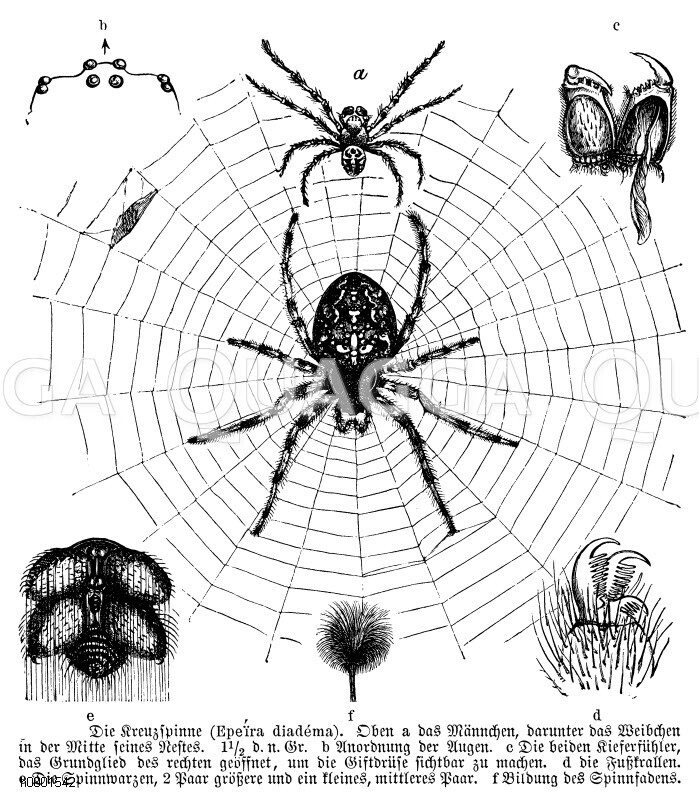 Netze und Nester von Spinnen