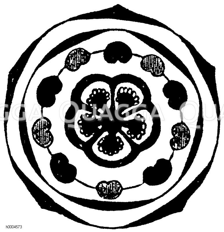 Blütenschemata