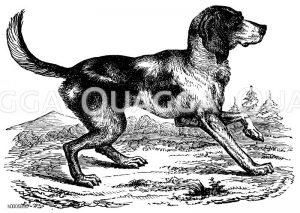 Jagdhunde