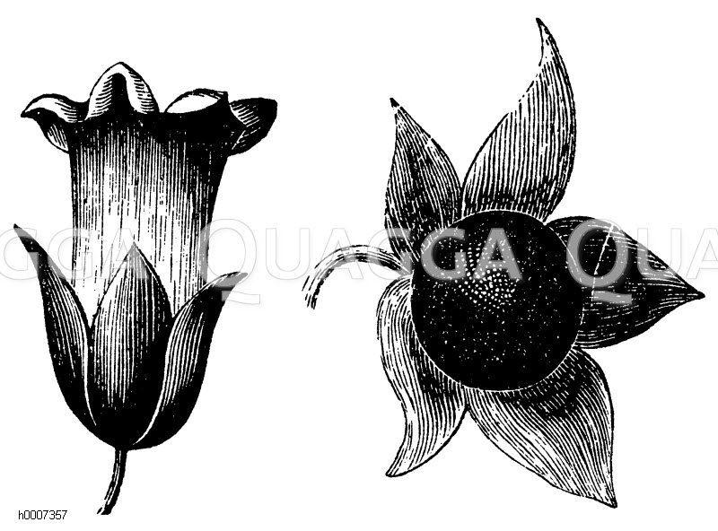 Zauberpflanzen