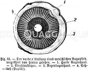 Organe, Gewebe