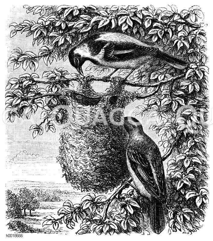 Vogelnester