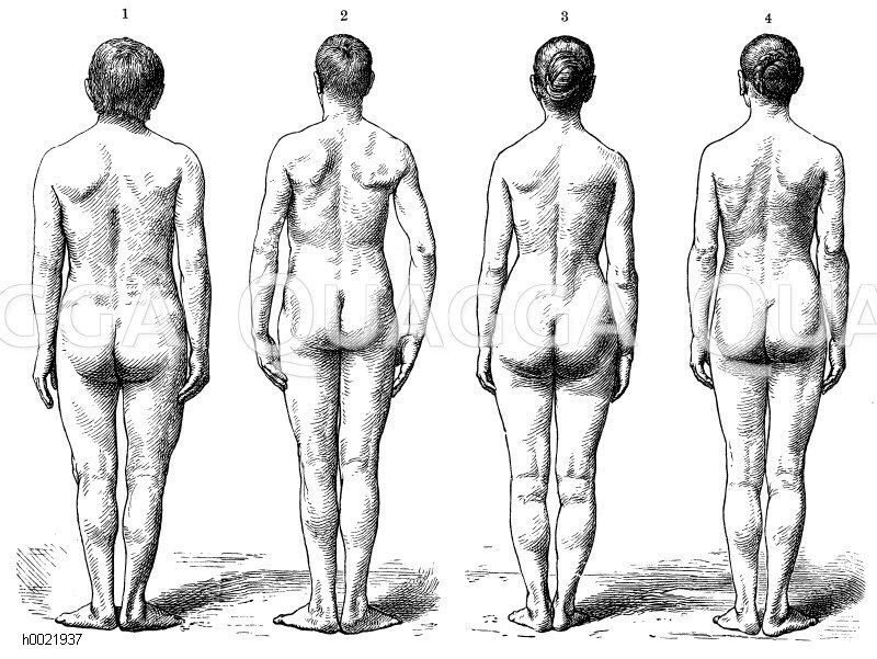 Unterschiede der Körperproportionen beider Geschlechter. Links ...