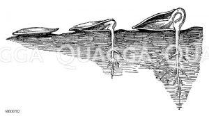 Keimung des Kürbissamens Zeichnung/Illustration