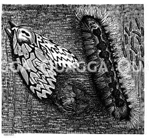 Nonne Zeichnung/Illustration