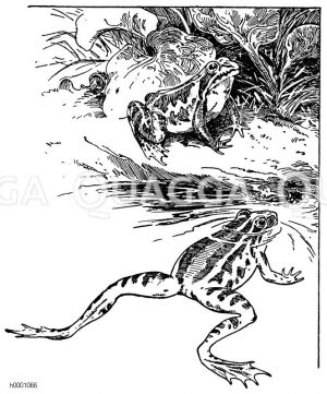 Frosch Zeichnung/Illustration
