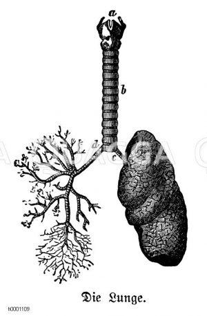 Mensch: Lunge Zeichnung/Illustration