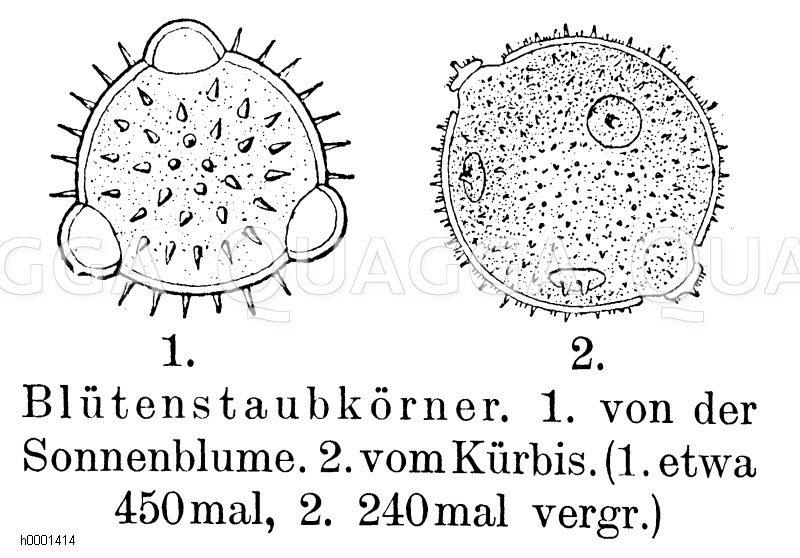Blütenstaubkörner