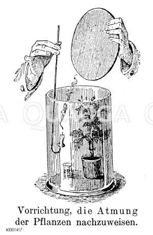 Experiment zum Beweis der Pflanzenatmung Zeichnung/Illustration