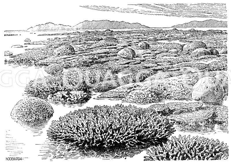 Korallenriff an der Küste vor Australien Zeichnung/Illustration