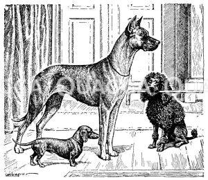 Hundeartige