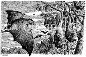 Fliegender Hund Zeichnung/Illustration