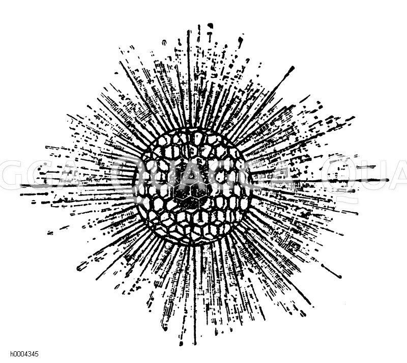 Gitterkugel Zeichnung/Illustration