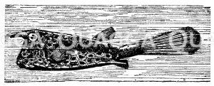 Kofferfisch Zeichnung/Illustration