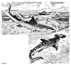 Menschenhai