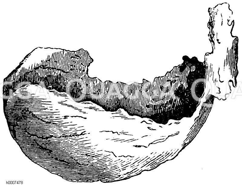 Schwalbe: Nest