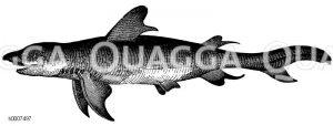 Haifisch Zeichnung/Illustration