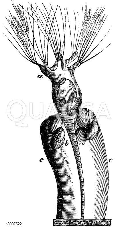 Blumenrädchen Zeichnung/Illustration