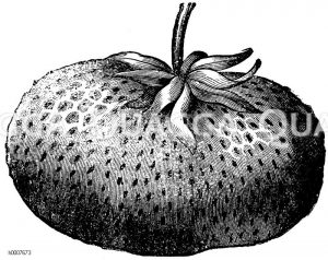 Ananas-Erdbeere