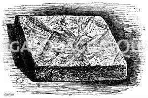 Champignonbruttafel Zeichnung/Illustration
