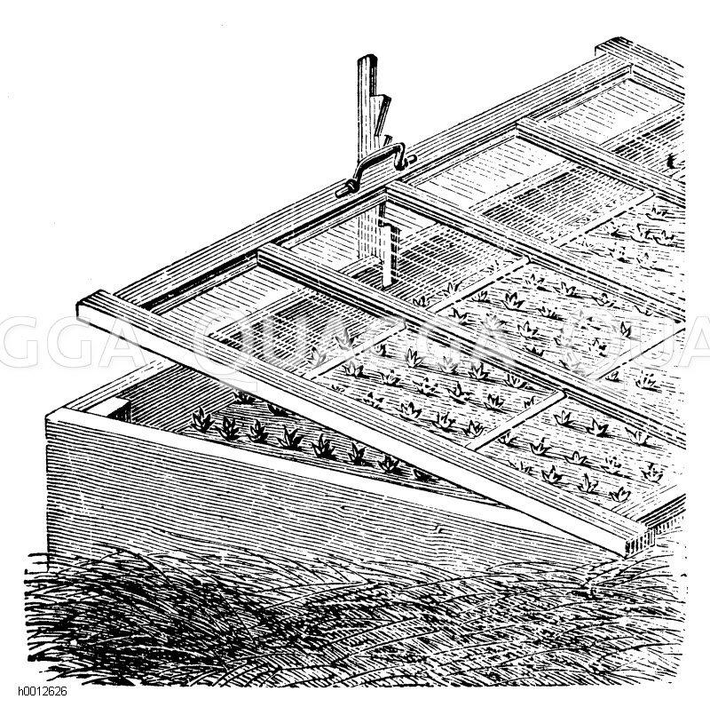Auf freiliegender Dunglage stehender Mistbeetrahmen (im Beete pikierte Sämlinge) Zeichnung/Illustration