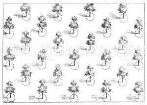 Anordnung von Obstbäumen beim Großanbau mit Baumscheiben Zeichnung/Illustration