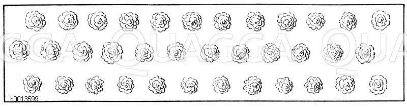 Reine Hoch- bzw. Halbstammpflanzung Zeichnung/Illustration