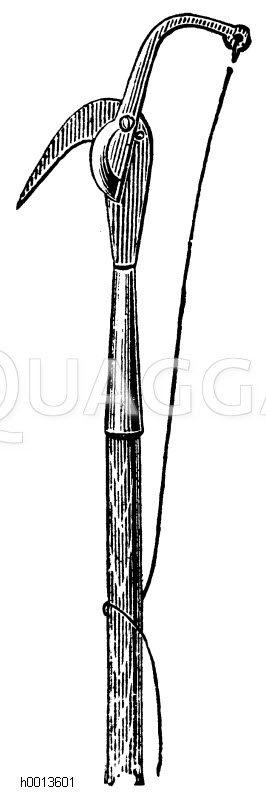 Raupenschere Zeichnung/Illustration