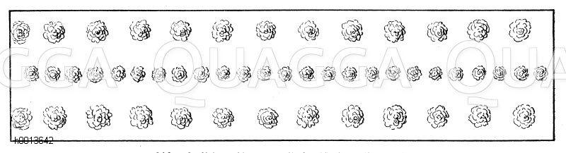 Zwischenreihen von Steinobst bzw. Buschobst Zeichnung/Illustration