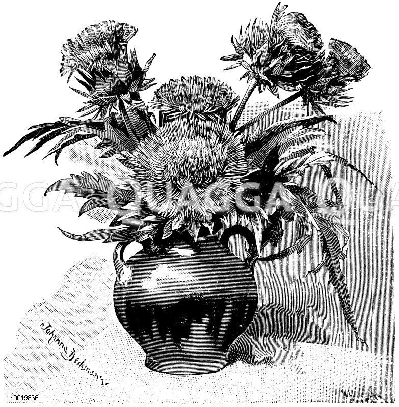 Blumenvase mit Artischockenblüten Zeichnung/Illustration