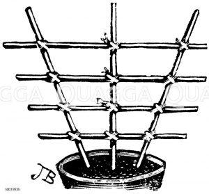 Fächerförmiges Gestell für Schlingpflanzen Zeichnung/Illustration