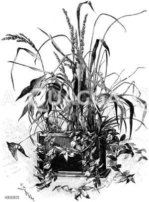 Aquarium mit Sumpfpflanzenkultur Zeichnung/Illustration