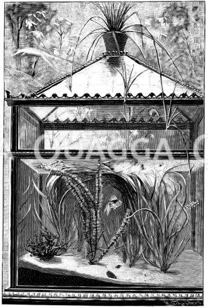 Geschlossenes Zimmeraquarium mit untergetauchten Wasserfplanzen Zeichnung/Illustration