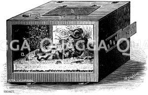 Aus einer Kiste hergestelltes heizbares Terrarium Zeichnung/Illustration