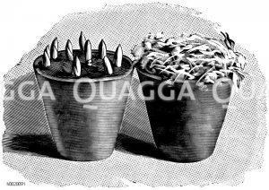 Links Topf mit frisch gepflanzten Maiblumentreibkeimen