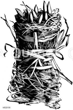 Fertiges Moosbündelchen mit Treibkeimen Zeichnung/Illustration