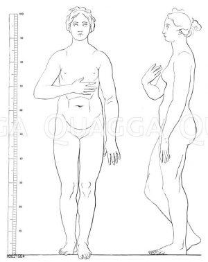 Körperproportionen der Mediceischen Venus (nach Schadow) Zeichnung/Illustration