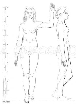 Körperproportionen eines mittelgroßen Weibes (nach Schadow) Zeichnung/Illustration