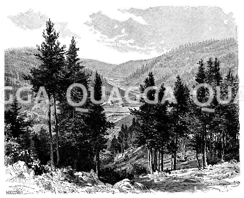 Tal bei Triberg im Schwarzwald Zeichnung/Illustration