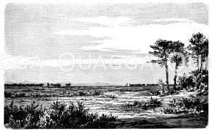 Lande der Gascogne Zeichnung/Illustration