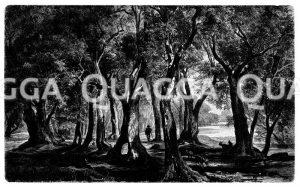 Olivenhain an der Riviera Zeichnung/Illustration