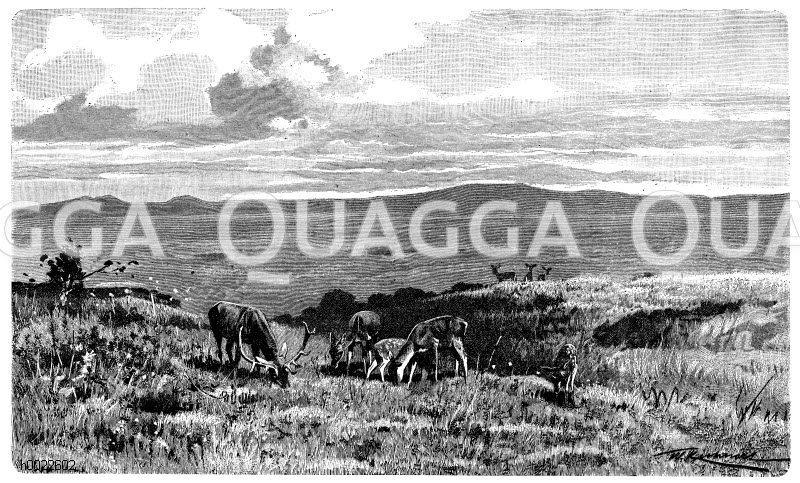 Plateau in den schottischen Hochlanden Zeichnung/Illustration