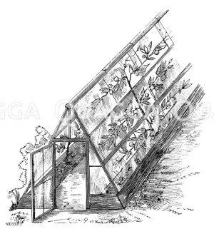 Gewächshaus. Schutzkasten welches in England und Frankreich häufige Verwendung bei der Spalierobstzucht fand Zeichnung/Illustration