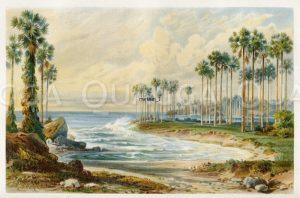 Palmyra-Palmen am Strand von Ceylon