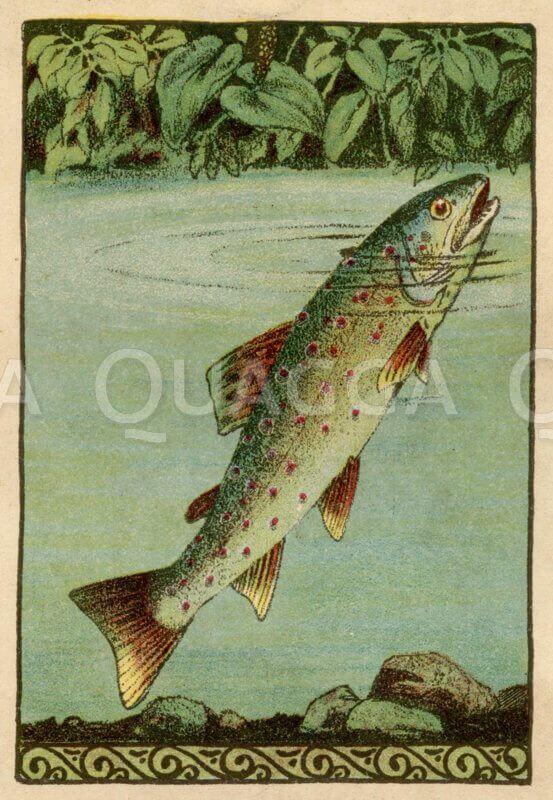Forelle steckt ihren Kopf aus dem Wasser Illustration