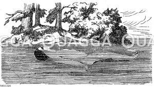 Rückenschwimmen Zeichnung/Illustration