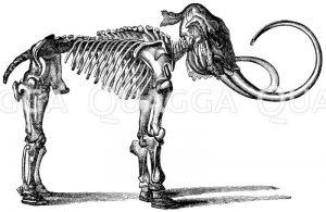 vollständige Skelette