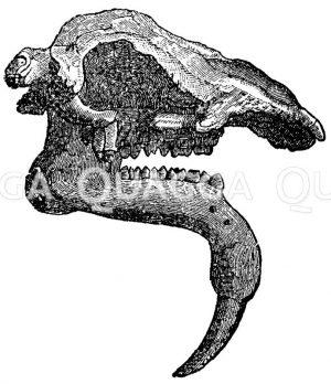Dinotherium gigantheum